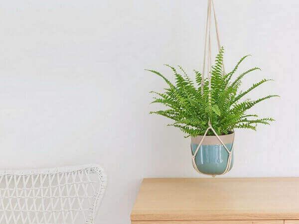 Samambaia pendurada para decorar ambiente de cozinha