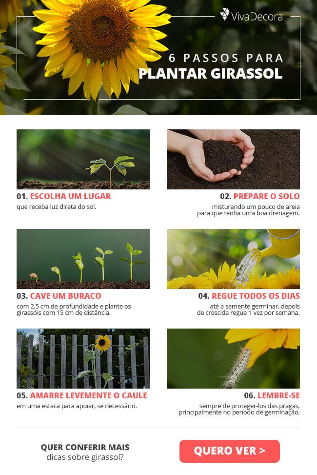 Infográfico - Girassol