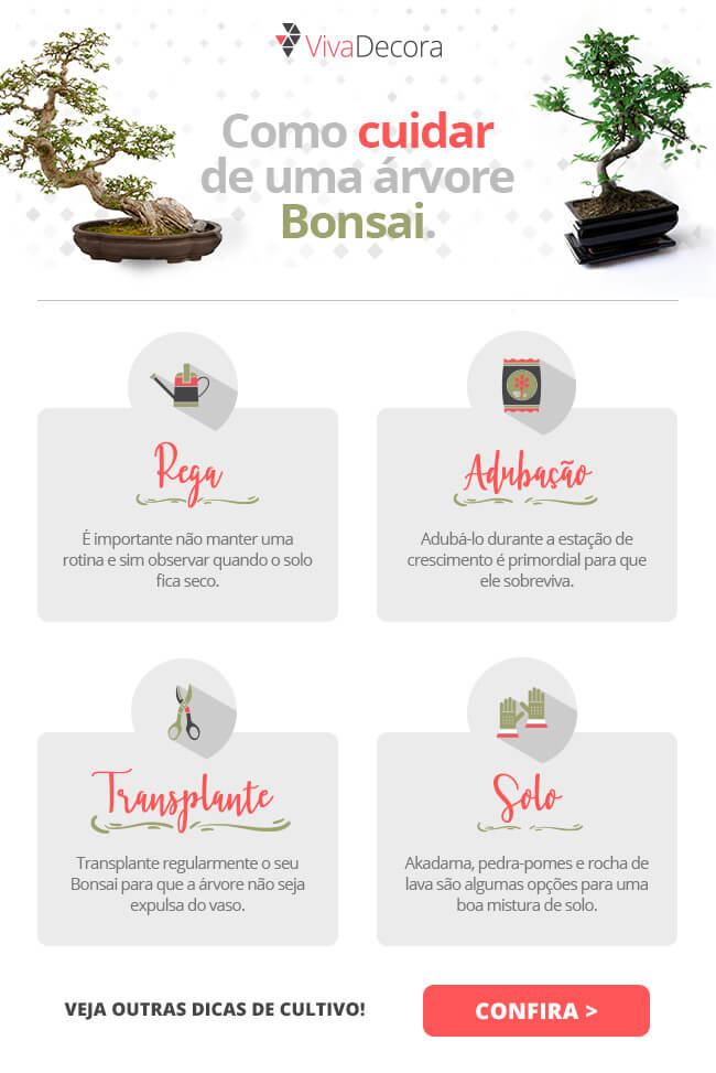 Infográfico - Bonsai