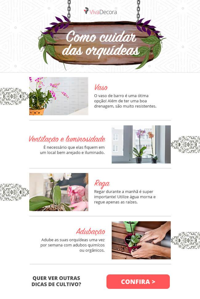 Infográfico - Como cuidar de orquídea