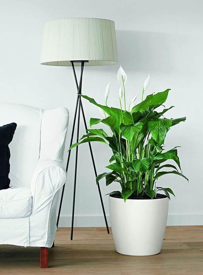 decoração sala com vaso de lírios da paz e luminária de chão Foto Lechuza