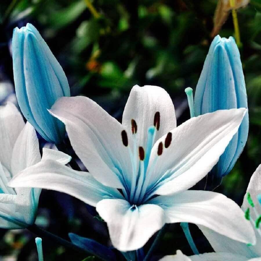 lírio azul Foto My Sparkles Store