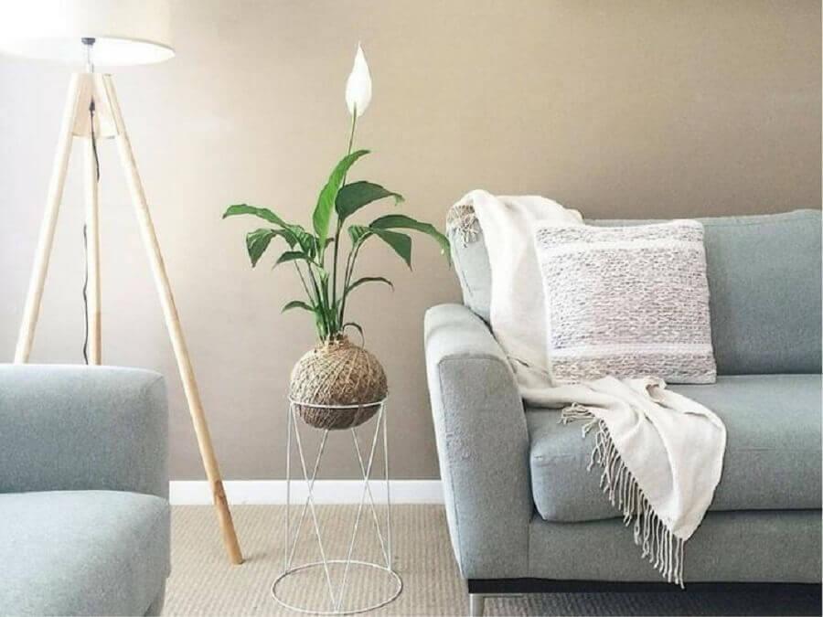 sala com decoração minimalista com lírio da paz Foto Living Gifts Brisbane