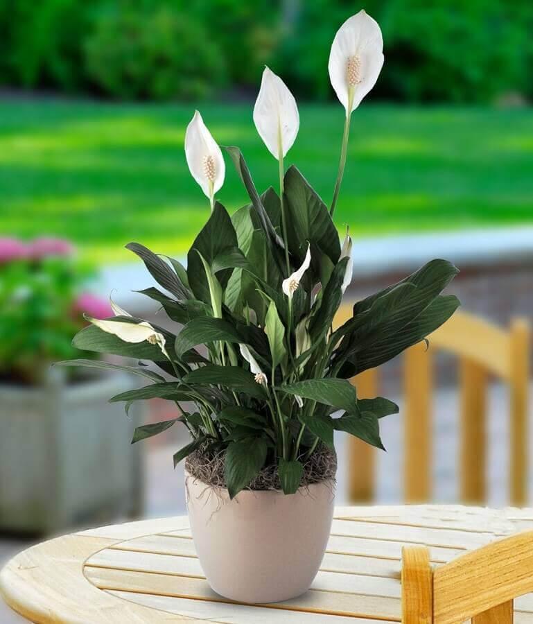 vaso de lírio da paz Foto Carithers Flowers