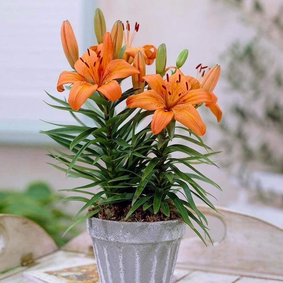 vaso de lírios laranjas Foto The Home Depot