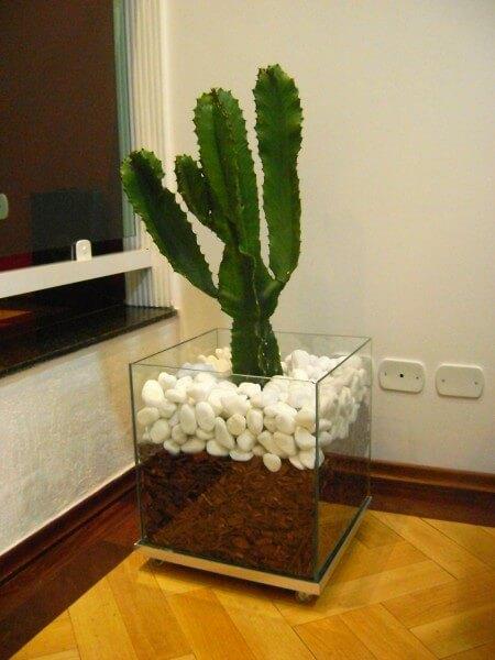 Cachepot de vidro com cacto Foto de Casa Pro