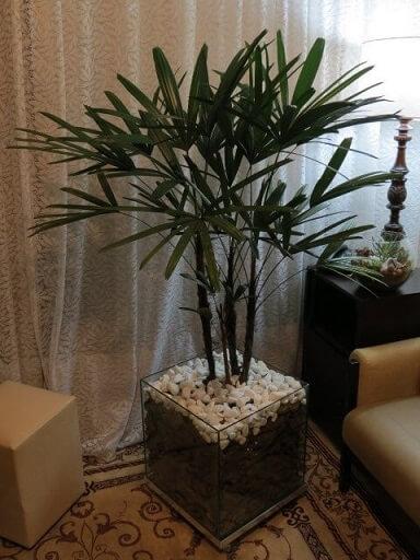 Cachepot de vidro com palmeira Foto de Mercado Livre