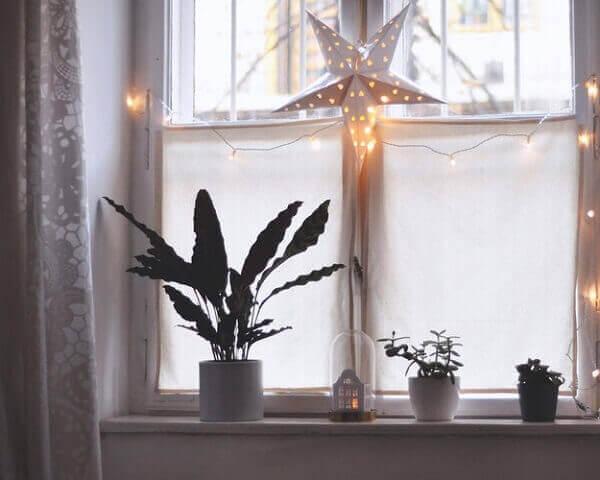 Decoração de natal simples e barata com plantas