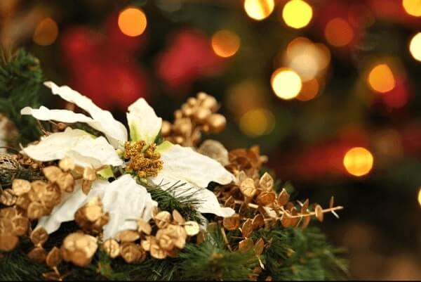 Flor de natal branca