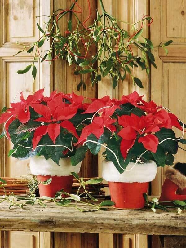 Flor de natal e vaso de papai noel