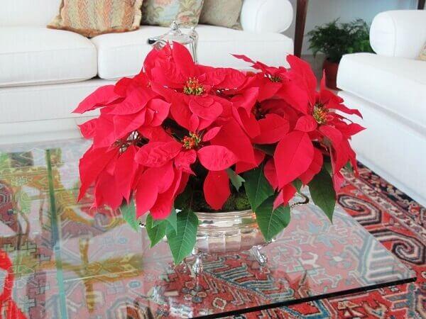 Flor de natal em mesa de sala de estar