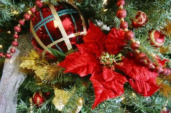 Flor de natal pendurada em árvore