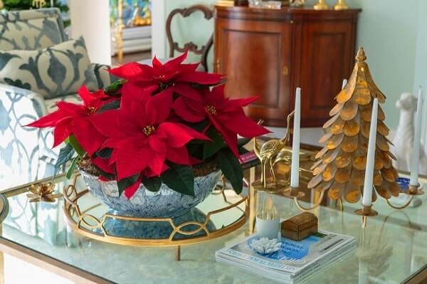 Flor de natal poinsetia para mesa