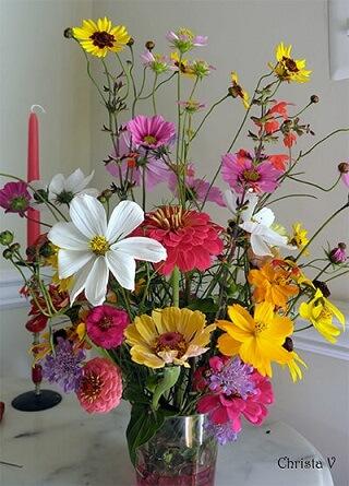 Flores do campo coloridas em vaso transparente Foto de Christa V