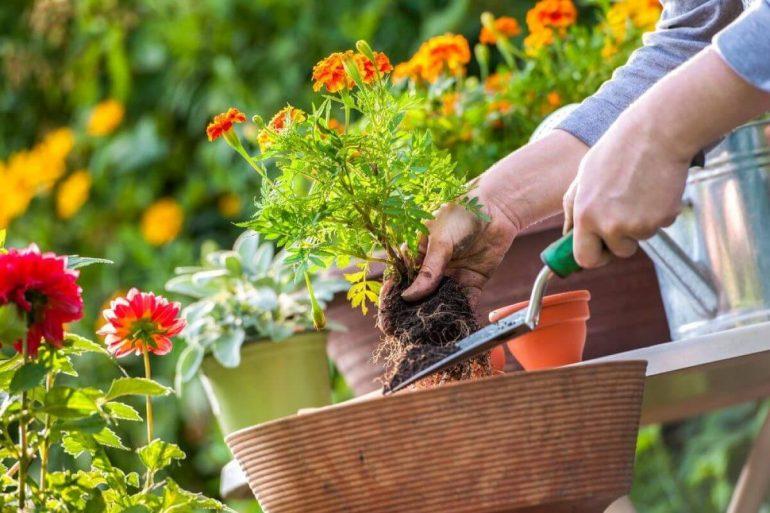 Utilize as ferramentas certas para a jardinagem