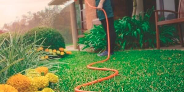 Jardinagem Mangueira