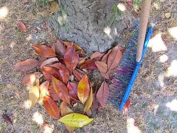 Jardinagem ancinhos