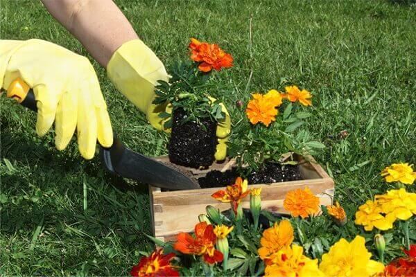 Jardinagem cuidados