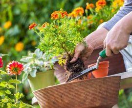 Jardinagem ferramenta