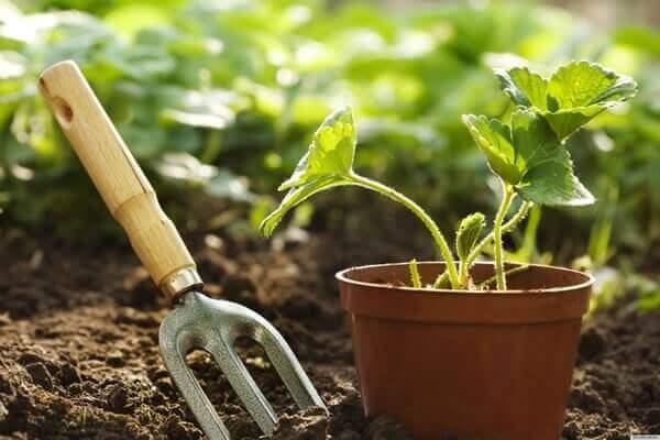 Jardinagem garfinho