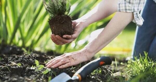 Jardinagem plantio