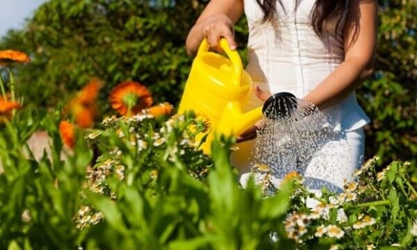 Jardinagem rega