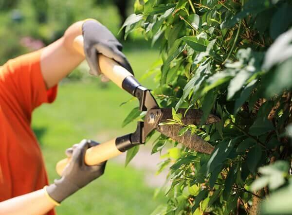 Jardinagem tesoura para poda
