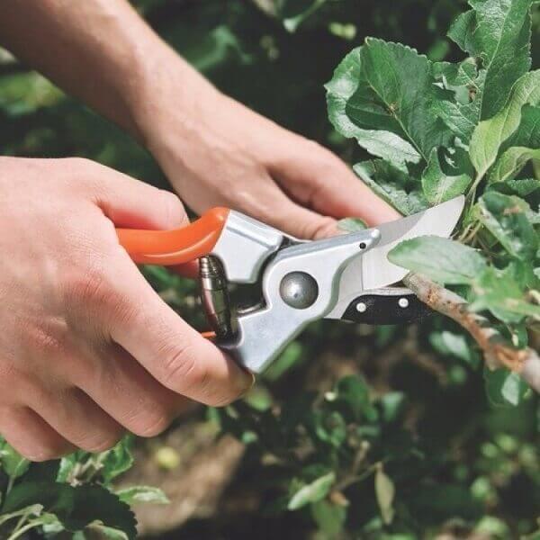 Jardinagem tesoura poda pequena