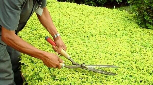 Jardinagem tesoura