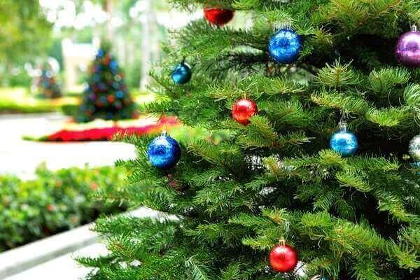 Pinheiro de Natal cuidados