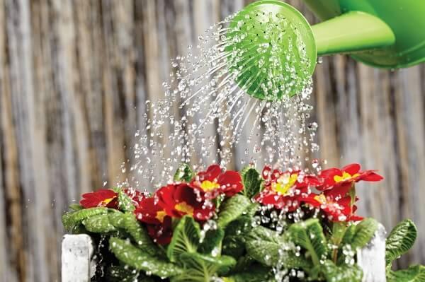 Utilize o regador na jardinagem adequado