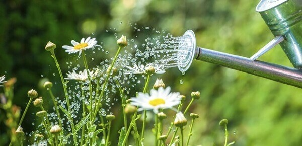 Jardinagem Regador