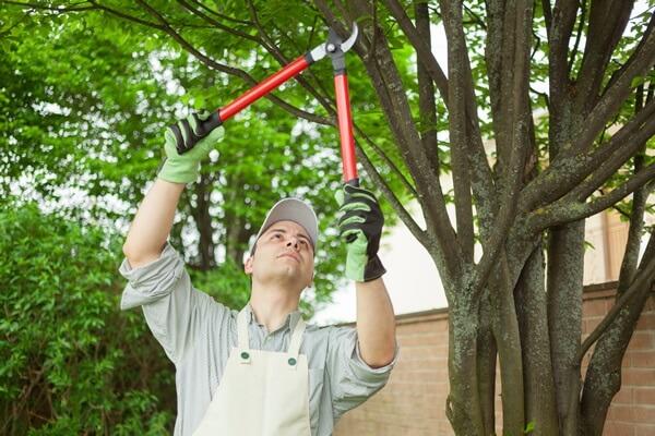 Galhos grossos na jardinagem exigem ferramentas de poda diferenciadas