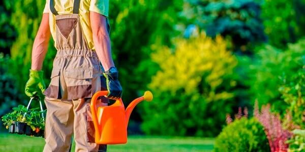 jardinagem trabalho