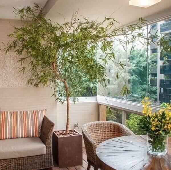 Plantas para dentro de casa Bambu mossô