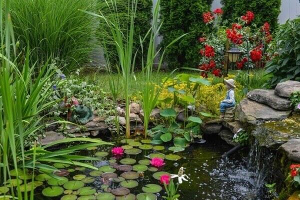 As plantas para jardim aquáticas para decorar lagos