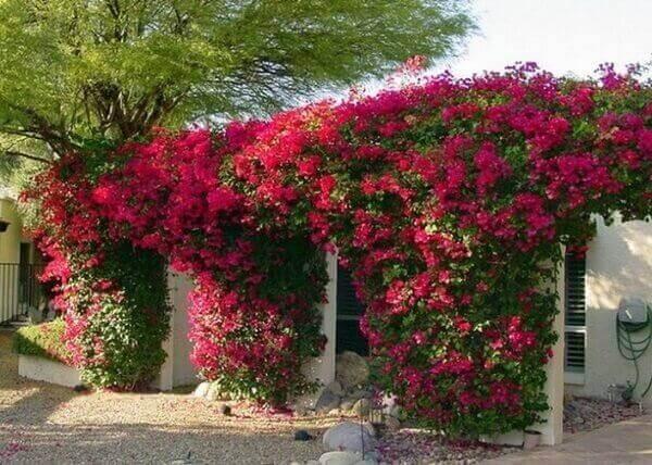 As plantas para jardim decoram o muro externo