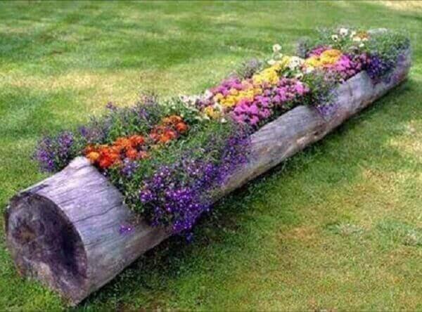 As plantas para jardim podem ser plantadas em troncos