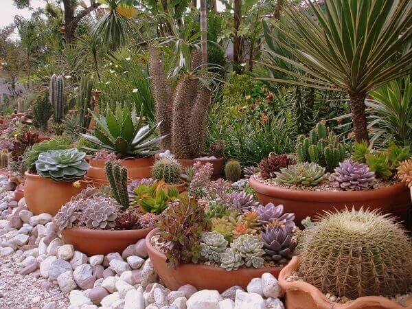 Mini jardim de suculenta  colorido