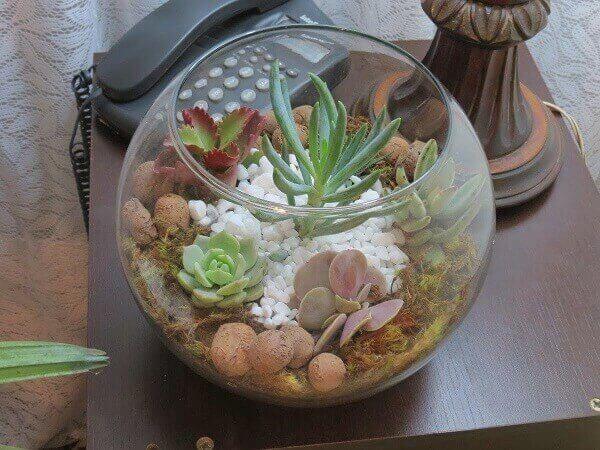 Mini jardim de suculentas foi montado em um aquário