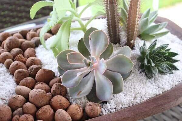 No mini jardim de suculentas foi utilizado pedra brancas e argila expandida