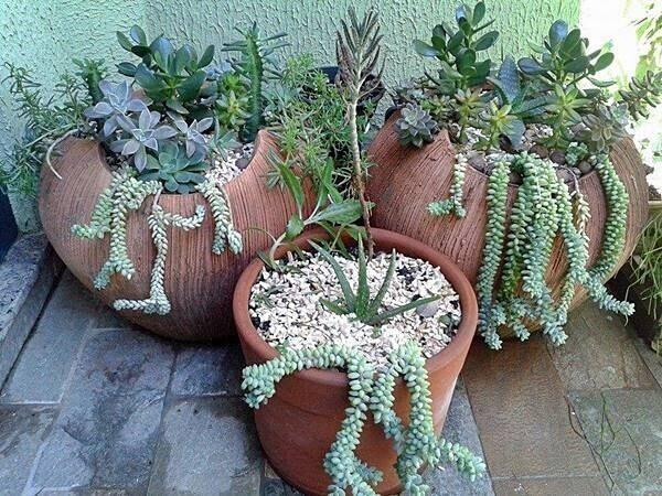 O jogo de 3 vasos com mini jardim de suculentas decoram a varanda