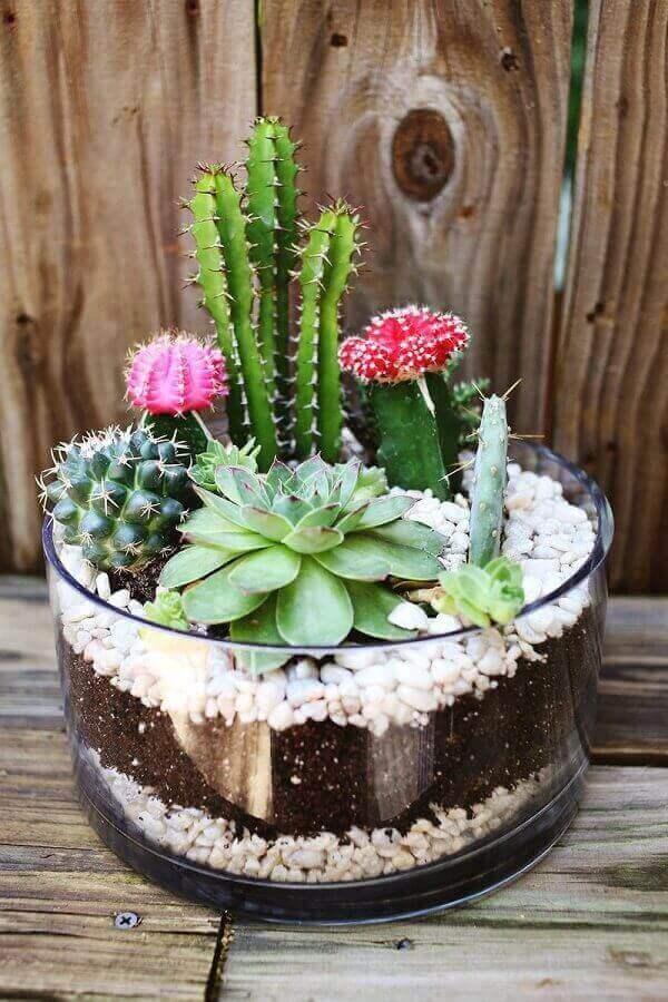 O mini jardim de suculentas plantados em vaso de vidro podem decorar todos os ambiente