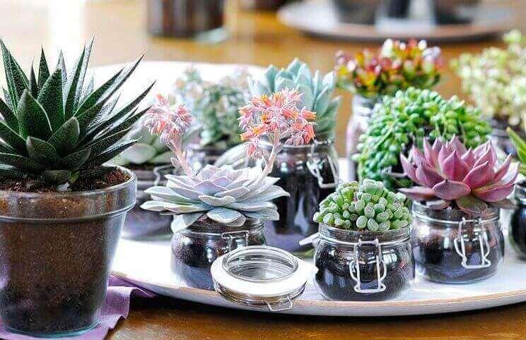 O mini jardim de suculentas pode ser plantadas em potes