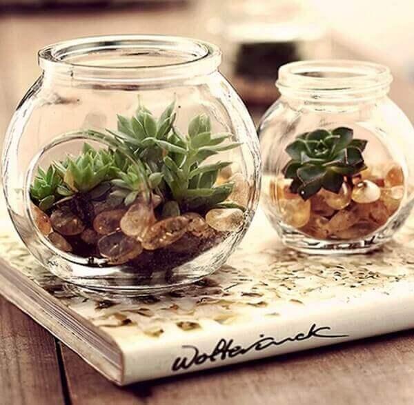 O mini jardim de suculentas podem decorar ambientes externos