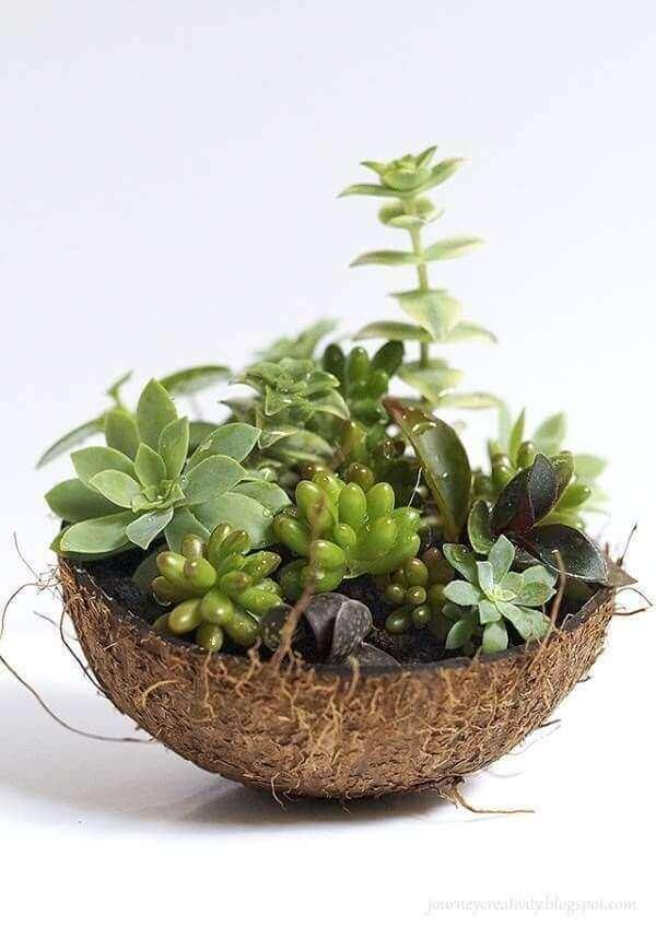 O mini jardim de suculentas utilizou como vaso a casca de um coco