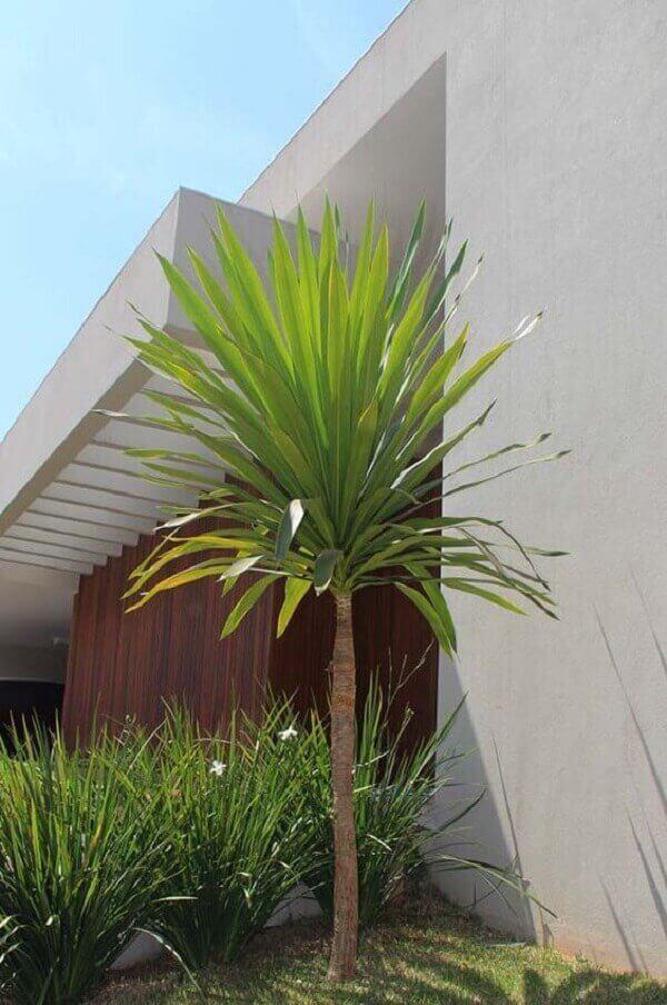Plantas para Jardim luca