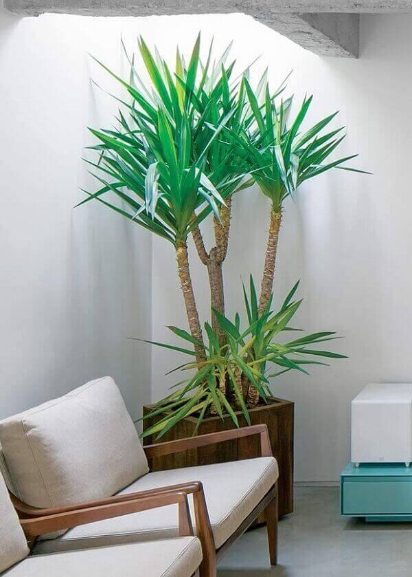 Plantas para dentro de casa Yuca