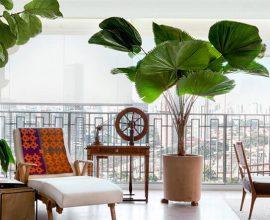 Plantas para dentro de casa palmeira leque
