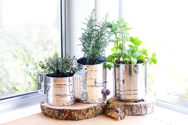 Plantas para dentro de casa temperos